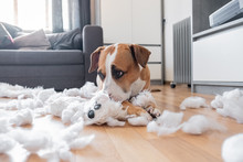 Guilty Dog And A Destroyed Ted...