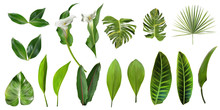 Tropical Leaves Collection. Vector Isolated Elements On The White Background. Exotic Botanical Design For Cosmetics, Spa, Perfume, Health Care Products, Aroma, Wedding Invitation.
