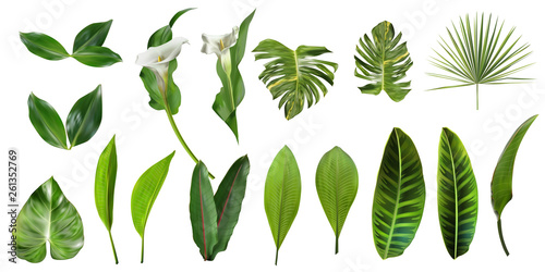 Obraz Tropical leaves collection. Vector isolated elements on the white background. Exotic botanical design for cosmetics, spa, perfume, health care products, aroma, wedding invitation. - fototapety do salonu