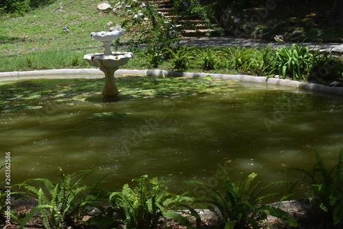 Fotografie, Obraz  on green pond