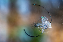Holes And Cracks On The Glass On Defocused Background