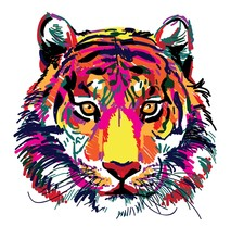 Tiger Head Multicolored Sketch. Indian, Amur Tiger. Drawing Markers, Pop Art. Stylish Poster.