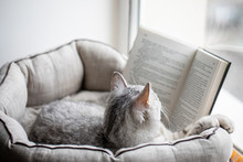 Cat Reads A Book On A Window Sill