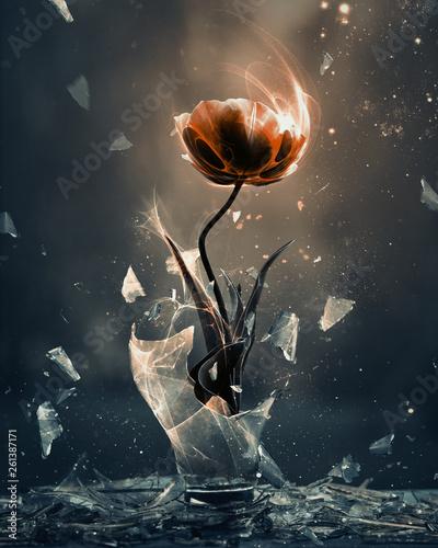 Valokuva Red tulip breaking forth