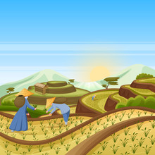 Landscape Background With Green Rice Terrace Fields. People Harvest Rice In Field. Harvesting, Agriculture Vector Illustration