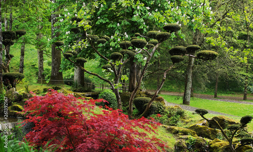 Poster Jardin Rhododendron blossom and topiary art in Maulivrier - Japanese Garden . France.