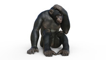 Chimpanzee Monkey, Primate Ape...