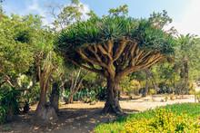 Tropical Plants, Wrigley Botan...