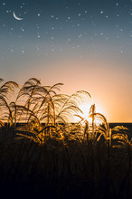 A Field Hit By Golden Sunlight And The Night Falling