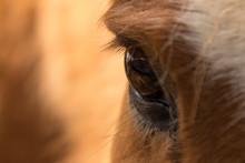 Closeup Of Horse Eye
