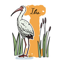 Alphabet Letter I With Cute Ibis