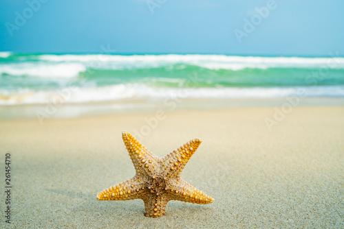 Fototapety, obrazy: Starfish at the beach