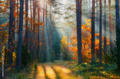 Foto op Aluminium Herfst Autumn forest