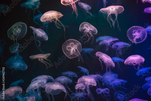 Foto  Jellyfish with neon glow light effect in Singapore aquarium