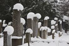 Zentralfriedhof  Central Cemet...