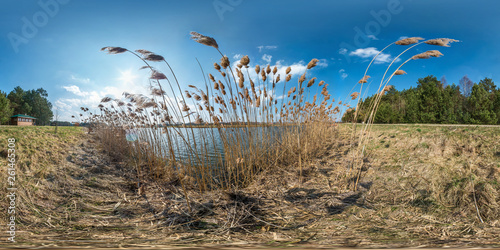 Obraz na płótnie full seamless hdri spherical panorama 360 degrees angle view on thickets of reeds near wide lake in sunny day