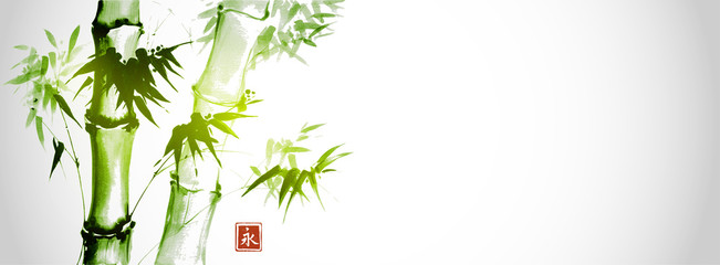Zelena bambusova stabla na bijeloj pozadini. Tradicionalna japanska slika ispiranja tinte sumi-e. Hijeroglif- vječnost