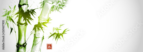 Fotografija Green bamboo trees on white background