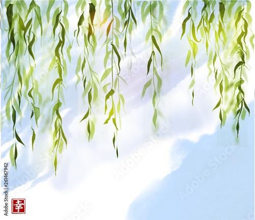 Fotografia Green willow tree on blue sky background