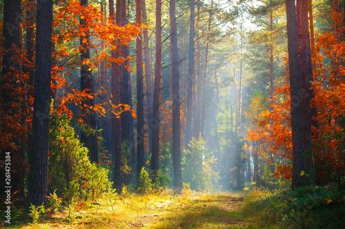 Fototapeten Wald Autumn sunlight in forest