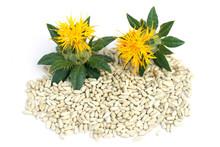 Safflower Seeds. Carthamus Tin...