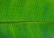 canvas print picture - palmblatt grün