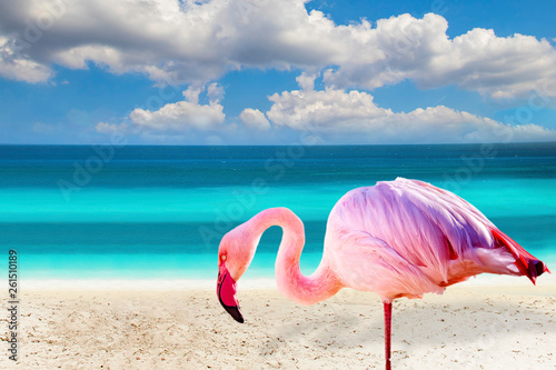 Spoed Foto op Canvas Flamingo Close up photo of flamingo standing on the beach. There is clear sea and blue sky in the background. It is situated in Mexico, Caribbean. It is tropical natural background.