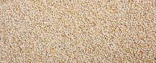 Raw Quinoa Seeds White Color Full Frame Background, Banner