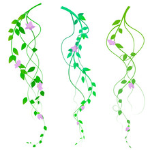 Twisted Branches With Pink Flowers, Vector