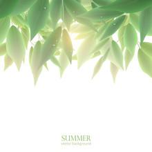 Dense Foliage And Sunlight, Vector