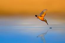 Amazing Bird Kingfisher. Divin...