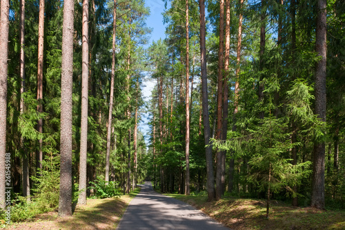Vászonkép  Asphalt road through the forest on a summer day