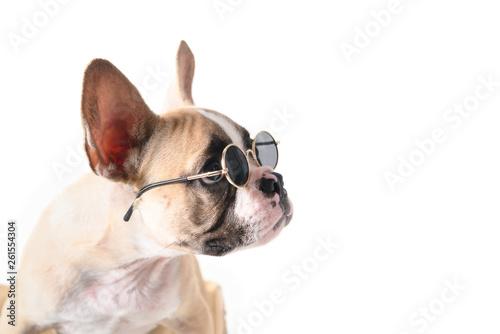 Poster Bouledogue français Cute french bulldog wear sunglass looking right side