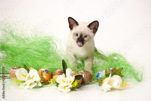 Fotografía  Siamese kitten on Easter background with Easter cake and Easter eggs