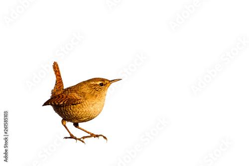 Valokuvatapetti Cute little bird