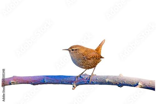 Photo  Cute little bird