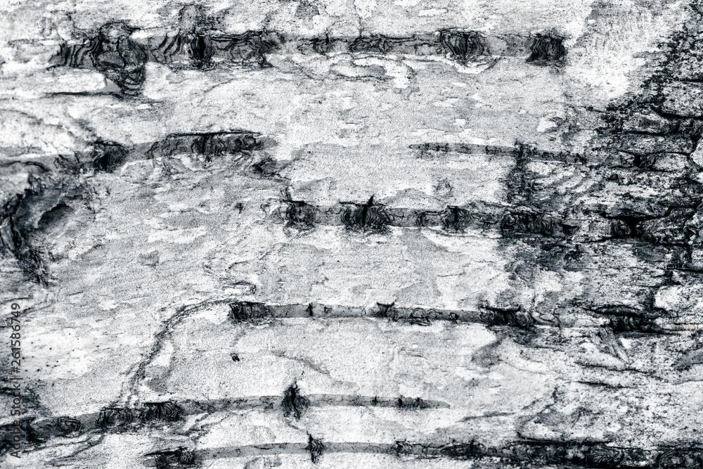 Birch bark surface.
