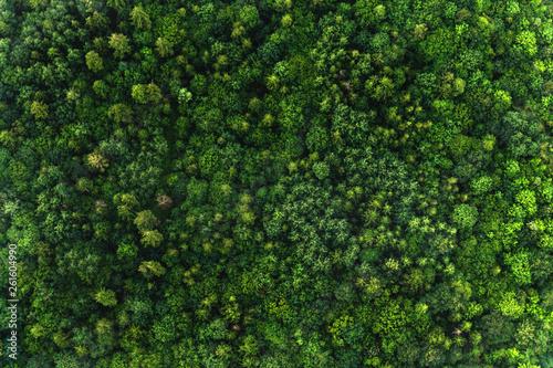 Photo sur Toile Rivière de la forêt Top view of the area green forest. Nature texture