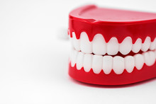 Generic Chattering Toy Teeth Close Up In A White Studio.