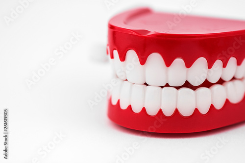 Generic chattering toy teeth close up in a white studio. Fototapeta