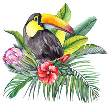 Toucan Bird With Exotic Protea...