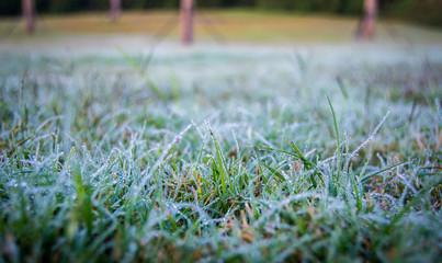 Field of frosty dew on grass
