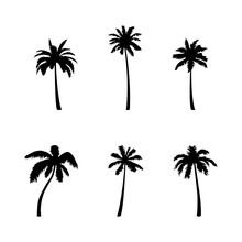 Coconut Palm Tree Silhouette I...