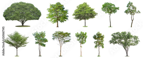 Poster Arbre The collection of trees isolated on white background. Beautiful and robust trees are growing in the forest, garden or park.