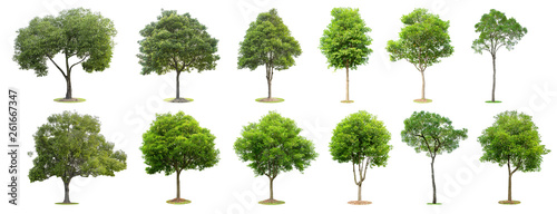 Ingelijste posters Bomen The collection of trees isolated on white background. Beautiful and robust trees are growing in the forest, garden or park.
