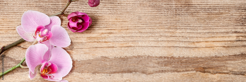 Fototapety, obrazy: Beautiful pink orchid flowers on wooden background.