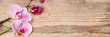 Beautiful pink orchid flowers on wooden background.