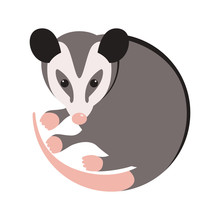 Cartoon Opossum, Vector Illus...