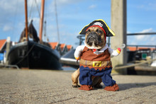Funny Brown French Bulldog Dog  Dressed Up In Pirate Costume With Hat And Hook Arm Standing At Harbour With Boats In Background