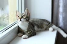 Lazy Lovely Black Cat Lying By The Window. Gray Tabby Cute Kitten With Beautiful Eyes Relaxing On Window Sill.